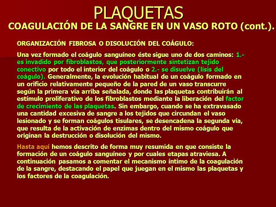 PLAQUETAS COAGULACIÓN DE LA SANGRE EN UN VASO ROTO (cont.).
