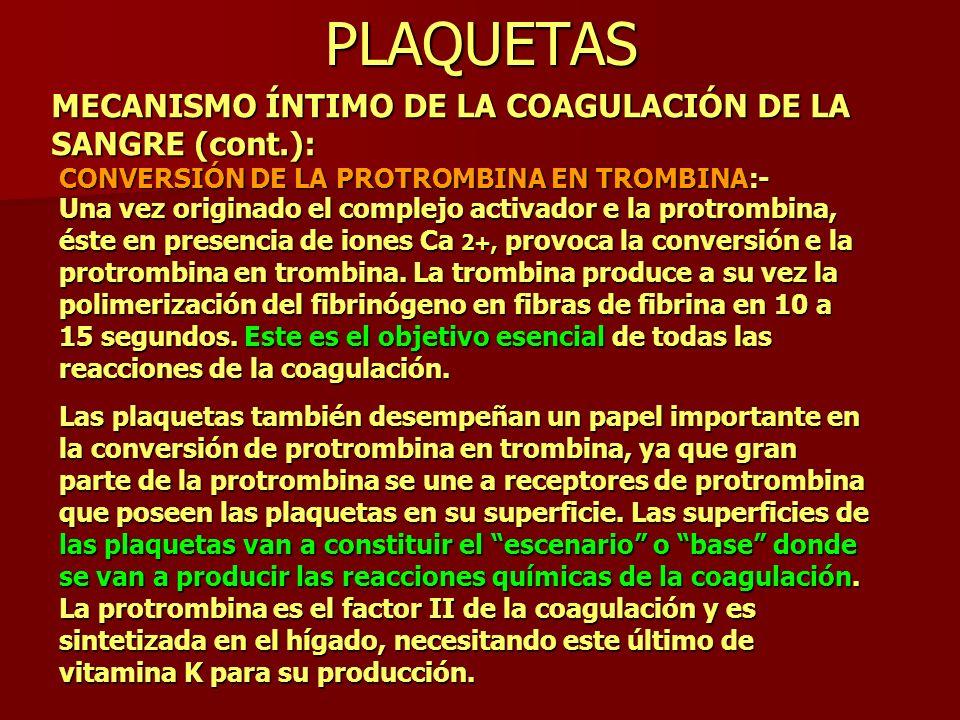 PLAQUETAS MECANISMO ÍNTIMO DE LA COAGULACIÓN DE LA SANGRE (cont.):