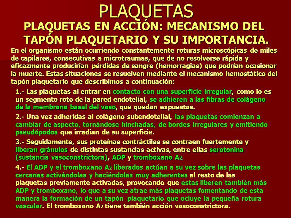 PLAQUETAS PLAQUETAS EN ACCIÓN: MECANISMO DEL TAPÓN PLAQUETARIO Y SU IMPORTANCIA.