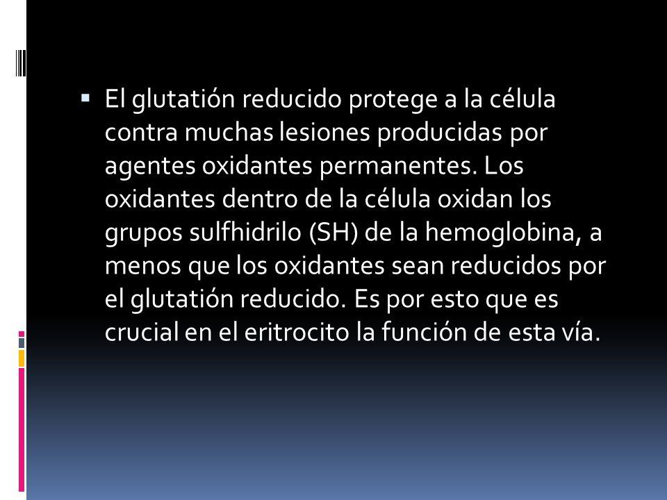 El glutatión reducido protege a la célula contra muchas lesiones producidas por agentes oxidantes permanentes.
