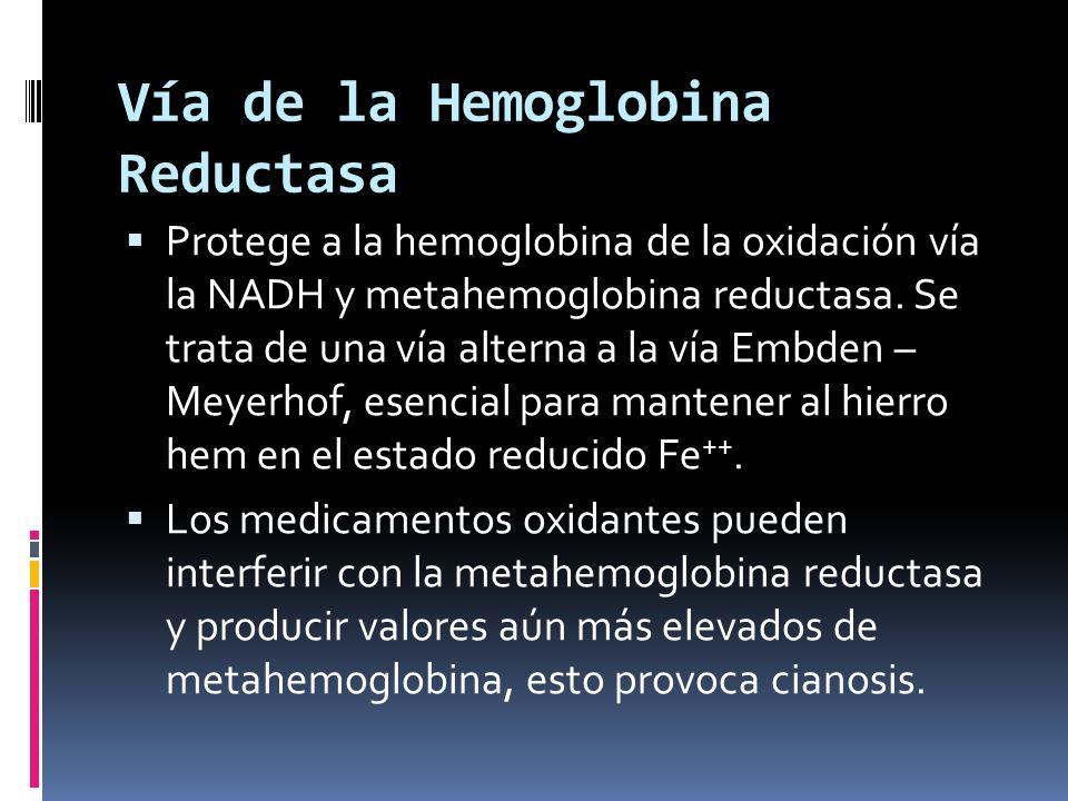 Vía de la Hemoglobina Reductasa
