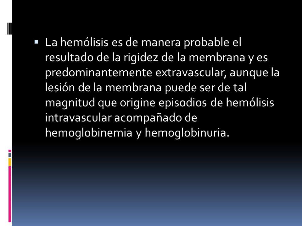 La hemólisis es de manera probable el resultado de la rigidez de la membrana y es predominantemente extravascular, aunque la lesión de la membrana puede ser de tal magnitud que origine episodios de hemólisis intravascular acompañado de hemoglobinemia y hemoglobinuria.