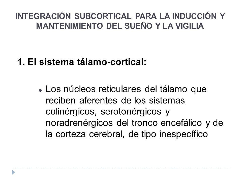 1. El sistema tálamo-cortical: