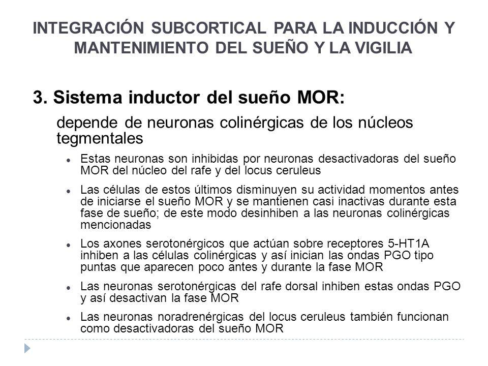 3. Sistema inductor del sueño MOR: