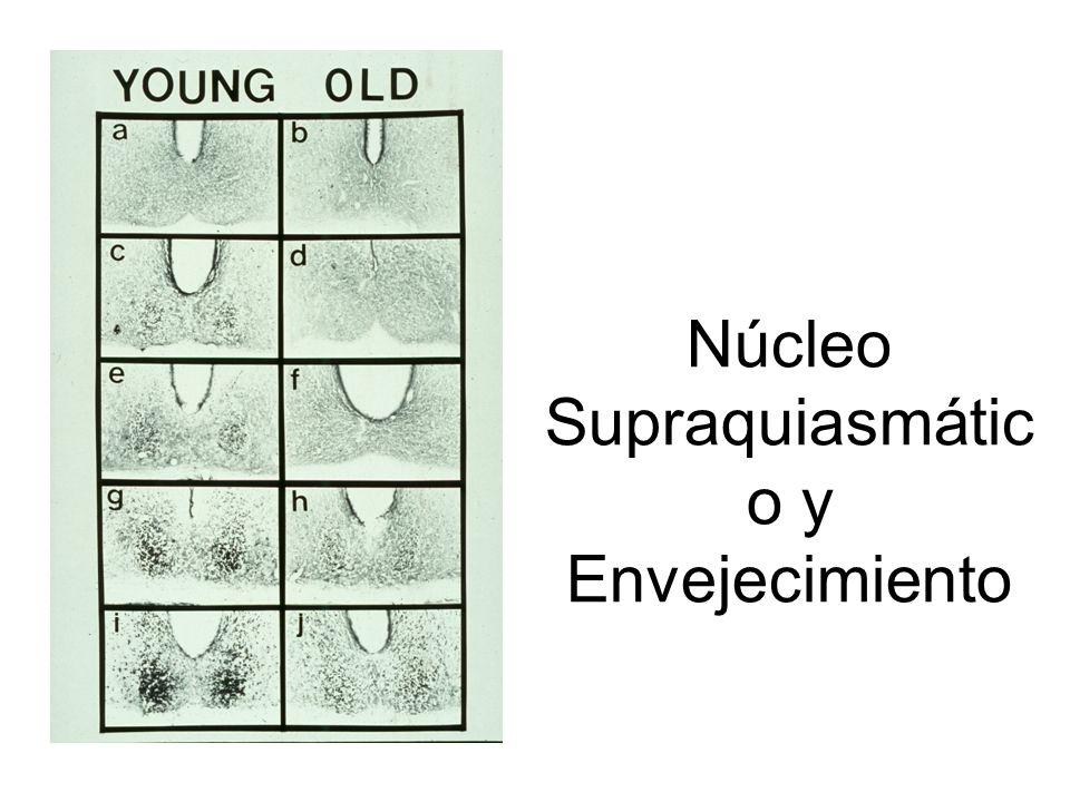 Núcleo Supraquiasmático y Envejecimiento