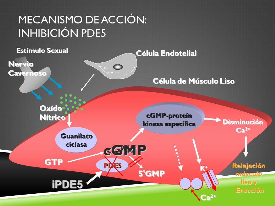 Mecanismo de Acción: Inhibición PDE5