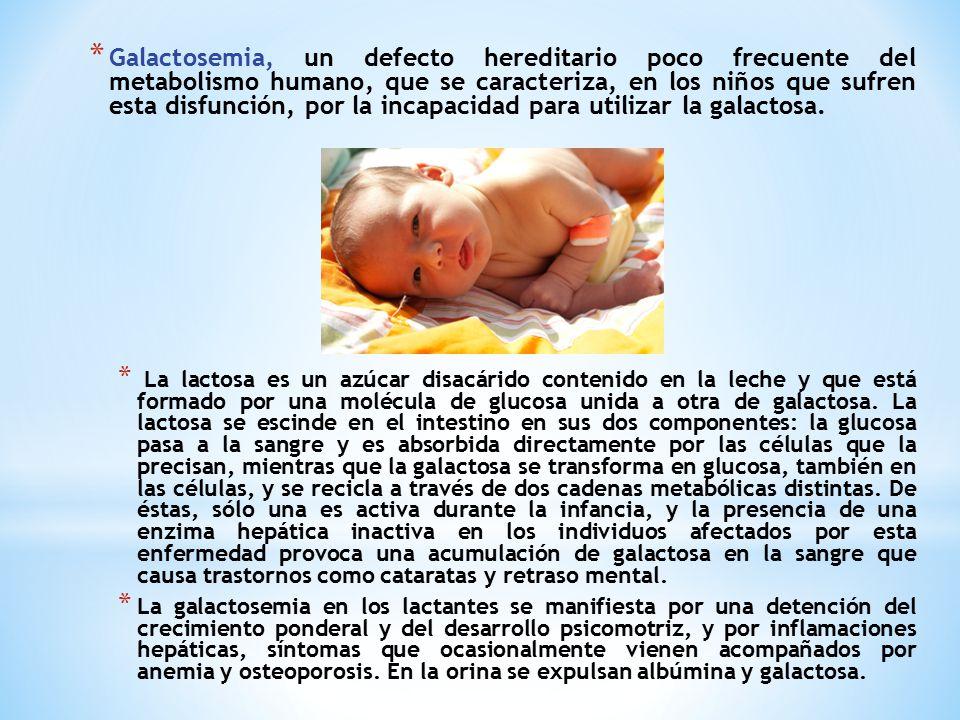 Galactosemia, un defecto hereditario poco frecuente del metabolismo humano, que se caracteriza, en los niños que sufren esta disfunción, por la incapacidad para utilizar la galactosa.