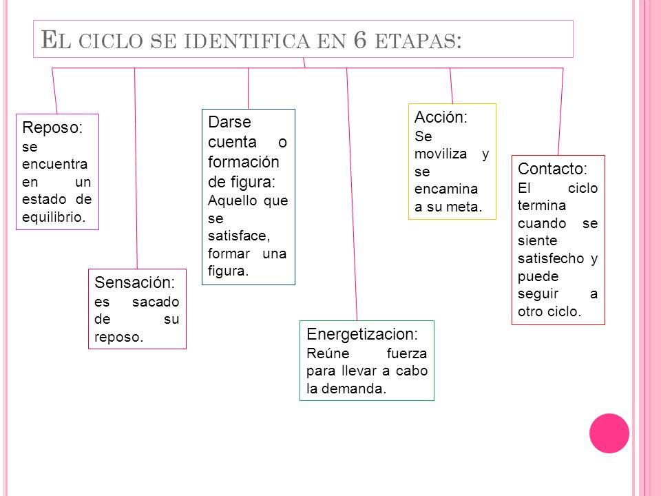 El ciclo se identifica en 6 etapas: