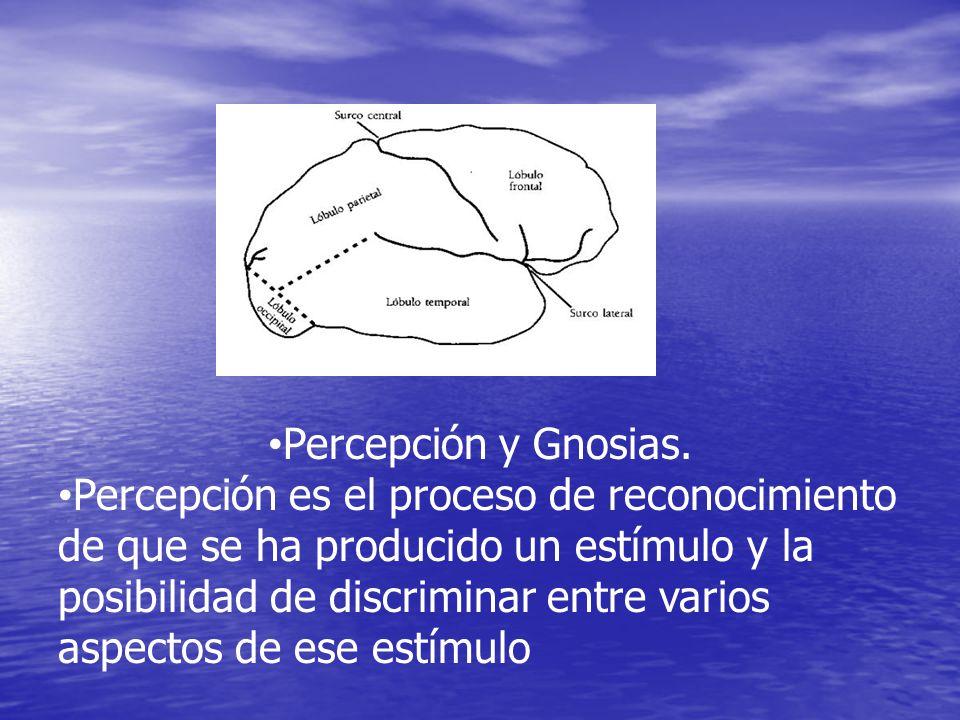 Percepción y Gnosias.