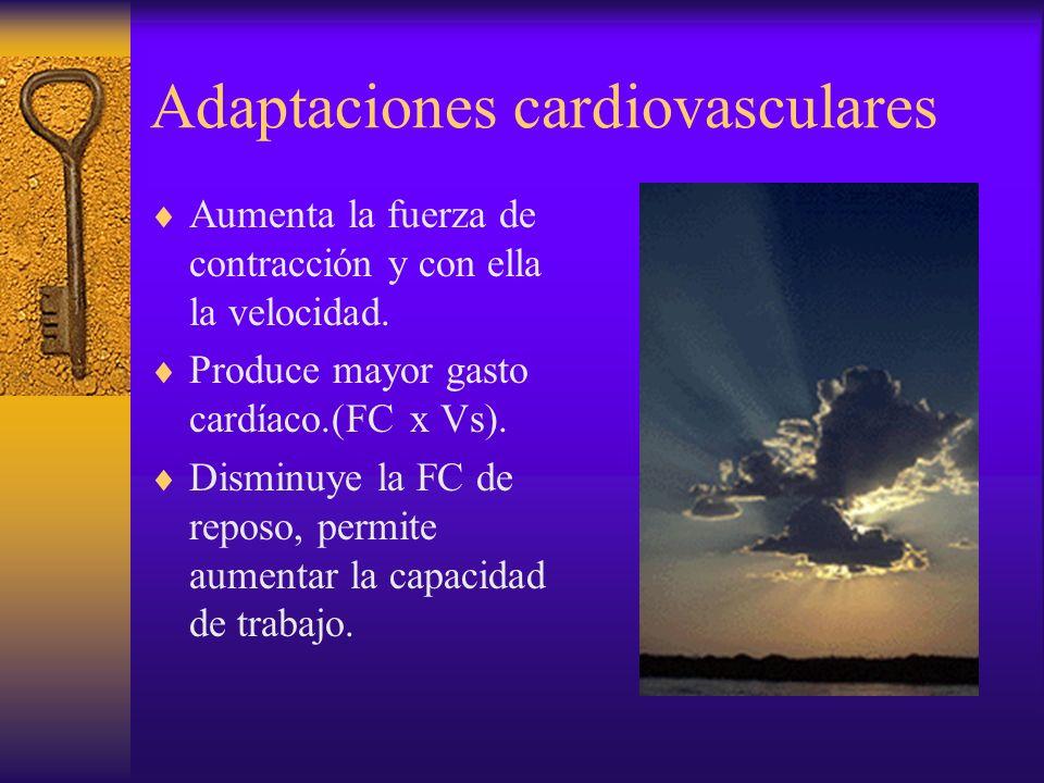 Adaptaciones cardiovasculares