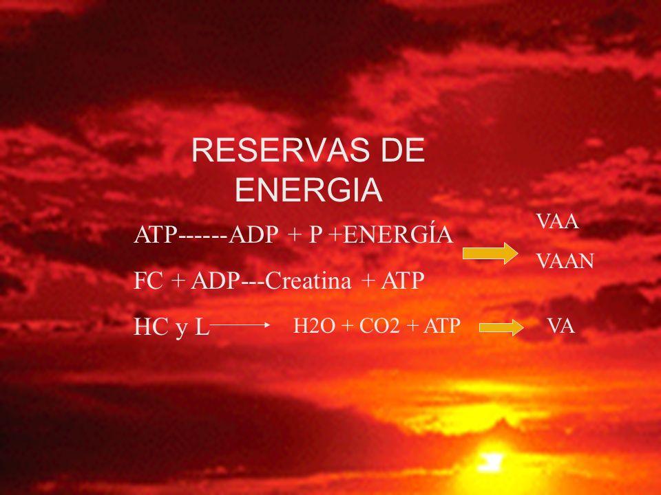 RESERVAS DE ENERGIA ATP------ADP + P +ENERGÍA