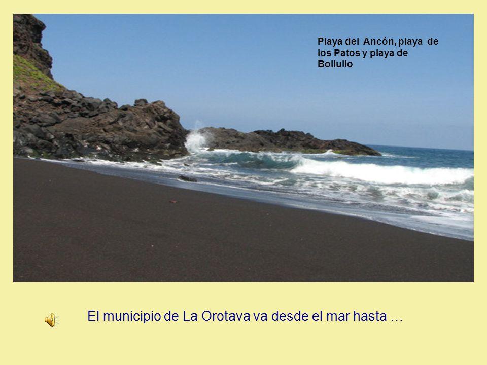 Desde el mar hasta… El municipio de La Orotava va desde el mar hasta …