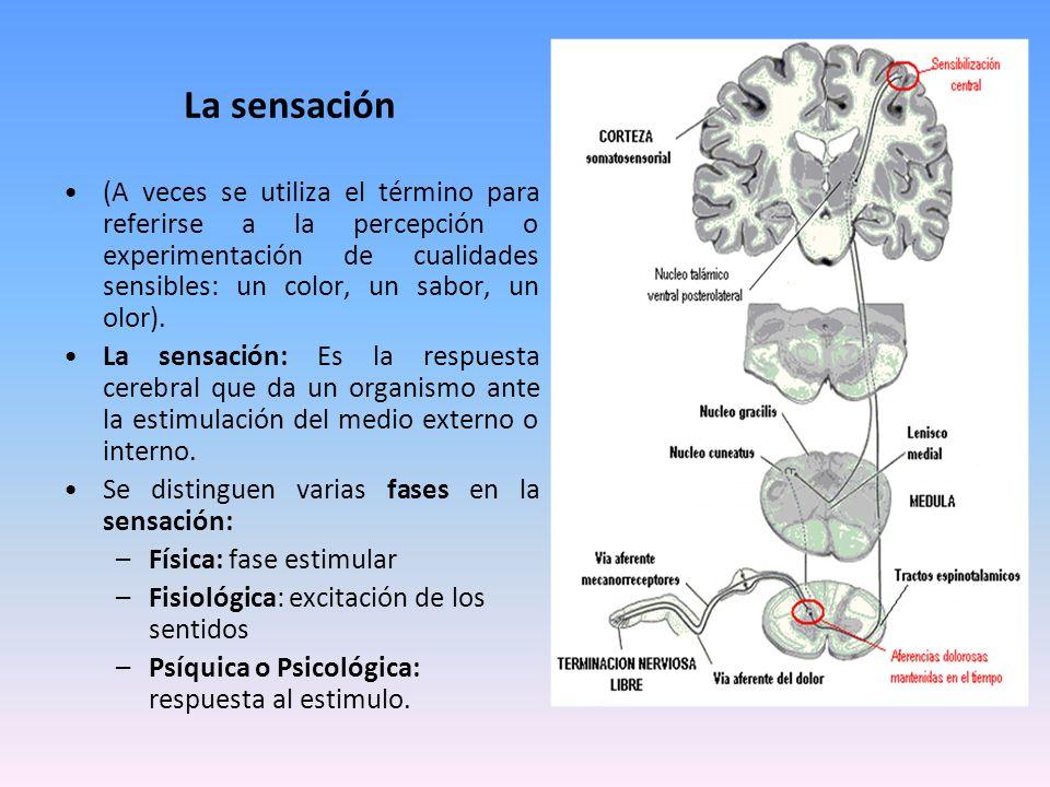 La sensación (A veces se utiliza el término para referirse a la percepción o experimentación de cualidades sensibles: un color, un sabor, un olor).