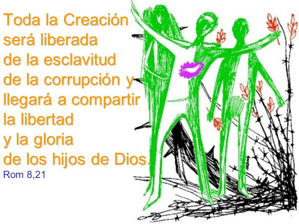 Toda la Creación será liberada de la esclavitud de la corrupción y llegará a compartir la libertad y la gloria de los hijos de Dios.