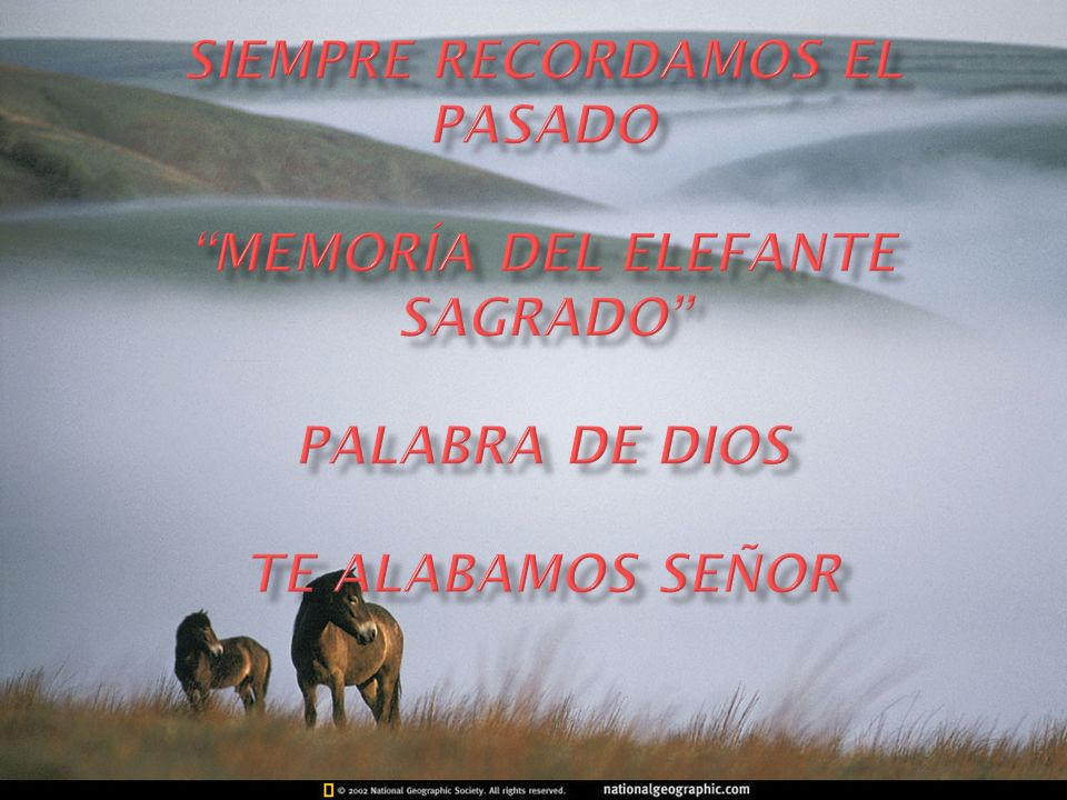SIEMPRE RECORDAMOS EL PASADO MEMORÍA DEL ELEFANTE SAGRADO PALABRA DE Dios te alabamos señor