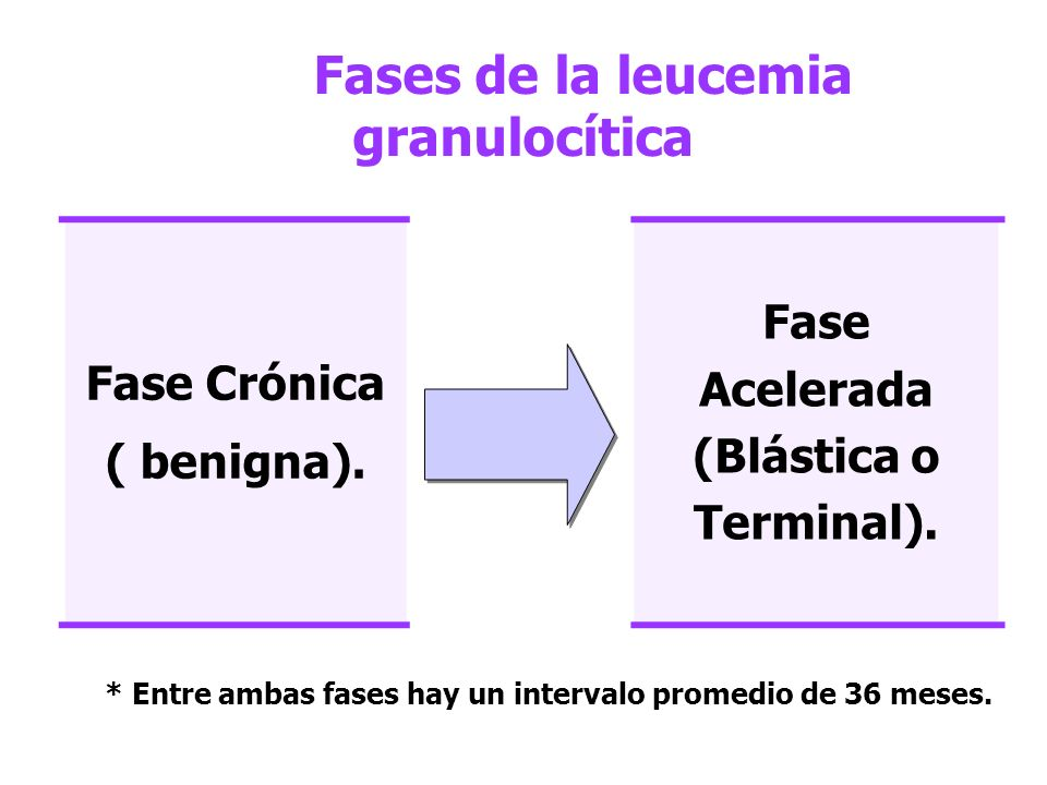 Fases de la leucemia granulocítica