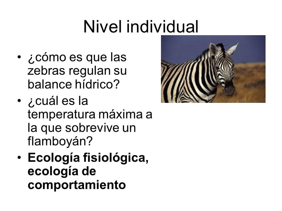 Nivel individual ¿cómo es que las zebras regulan su balance hídrico