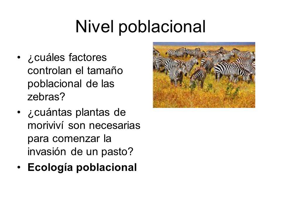Nivel poblacional ¿cuáles factores controlan el tamaño poblacional de las zebras