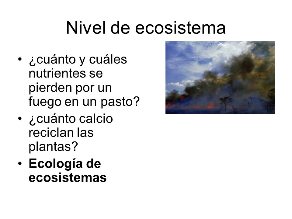 Nivel de ecosistema ¿cuánto y cuáles nutrientes se pierden por un fuego en un pasto ¿cuánto calcio reciclan las plantas
