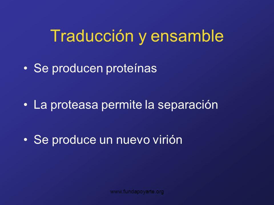 Traducción y ensamble Se producen proteínas