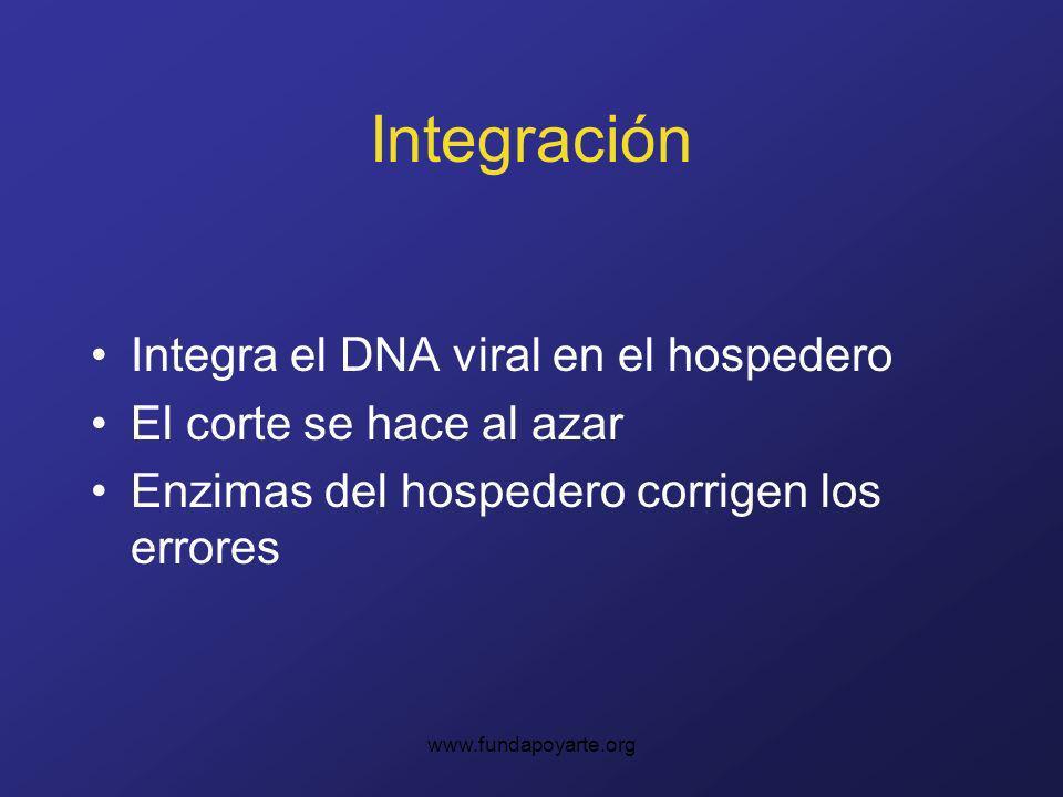 Integración Integra el DNA viral en el hospedero