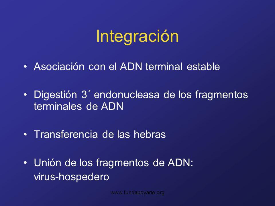 Integración Asociación con el ADN terminal estable