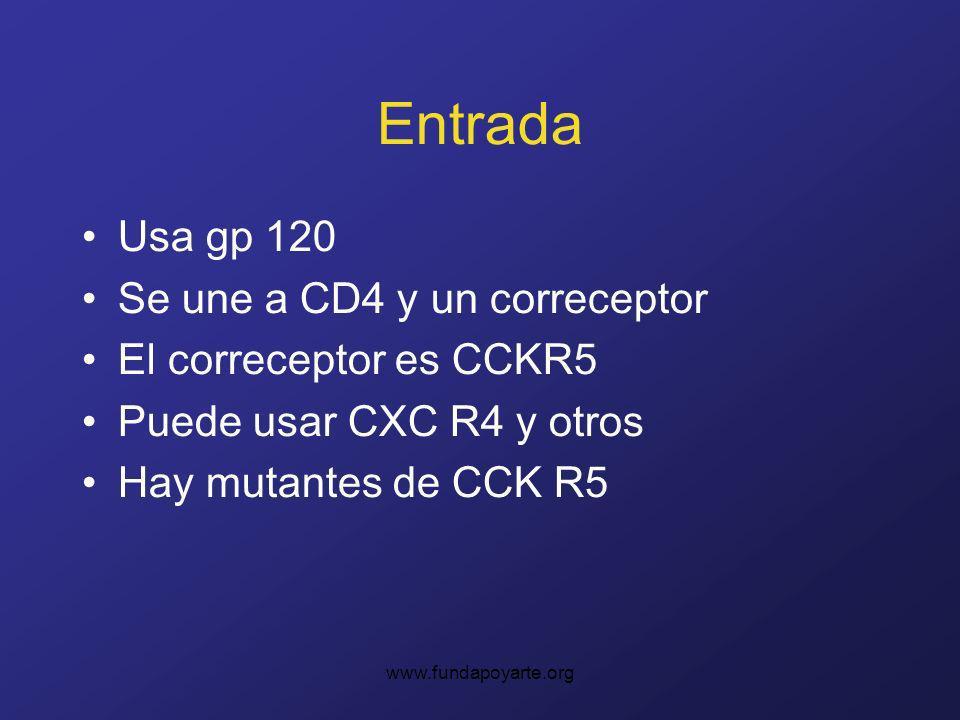 Entrada Usa gp 120 Se une a CD4 y un correceptor