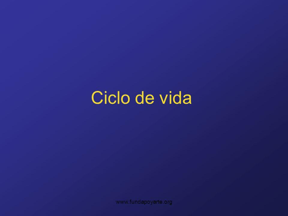 Ciclo de vida www.fundapoyarte.org