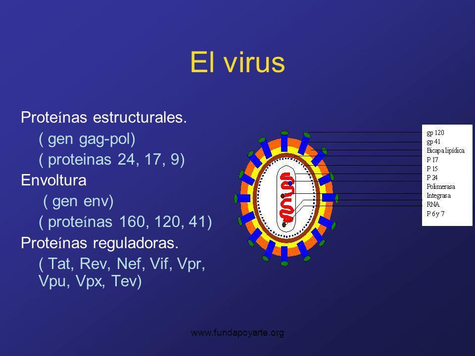 El virus Proteínas estructurales. ( gen gag-pol)