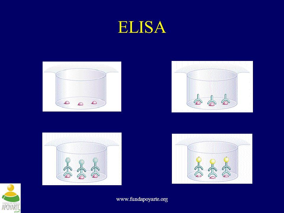 ELISA www.fundapoyarte.org