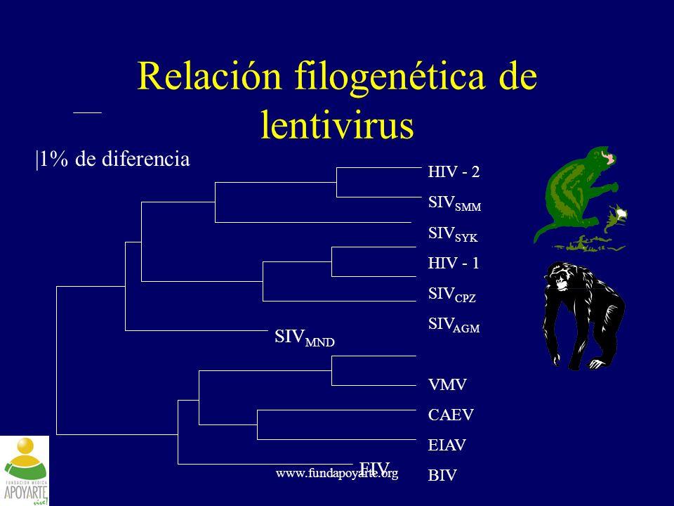 Relación filogenética de lentivirus