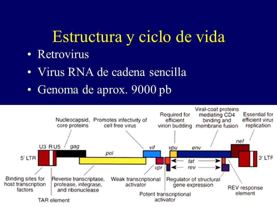Estructura y ciclo de vida