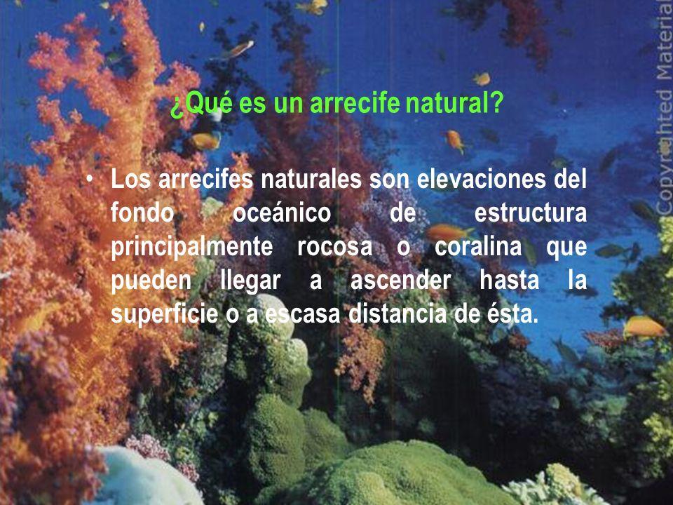 ¿Qué es un arrecife natural