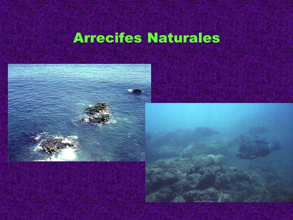 Arrecifes Naturales