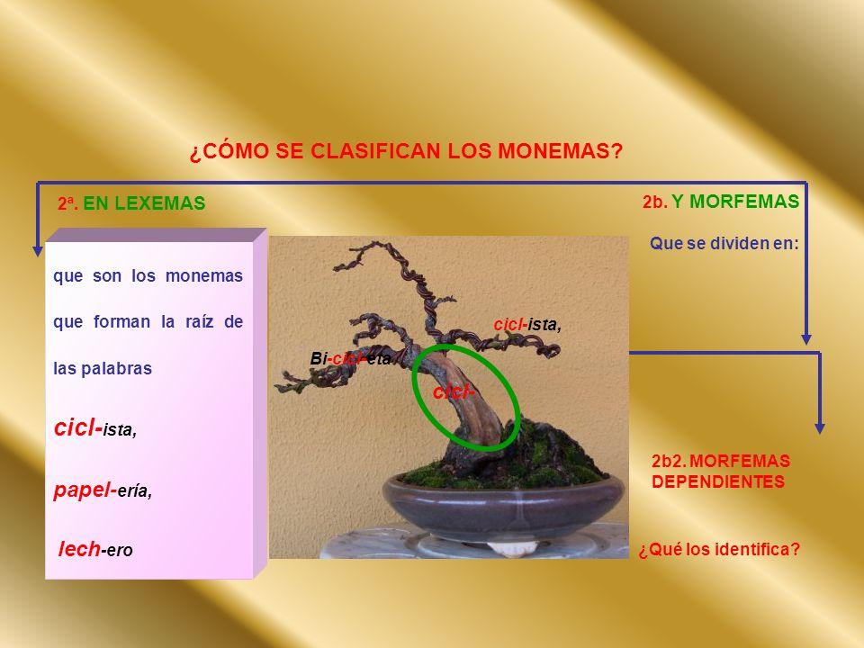 cicl-ista, ¿CÓMO SE CLASIFICAN LOS MONEMAS papel-ería, cicl-