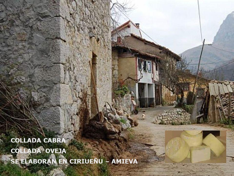 COLLADA CABRA COLLADA OVEJA SE ELABORAN EN CIRIUEÑU – AMIEVA