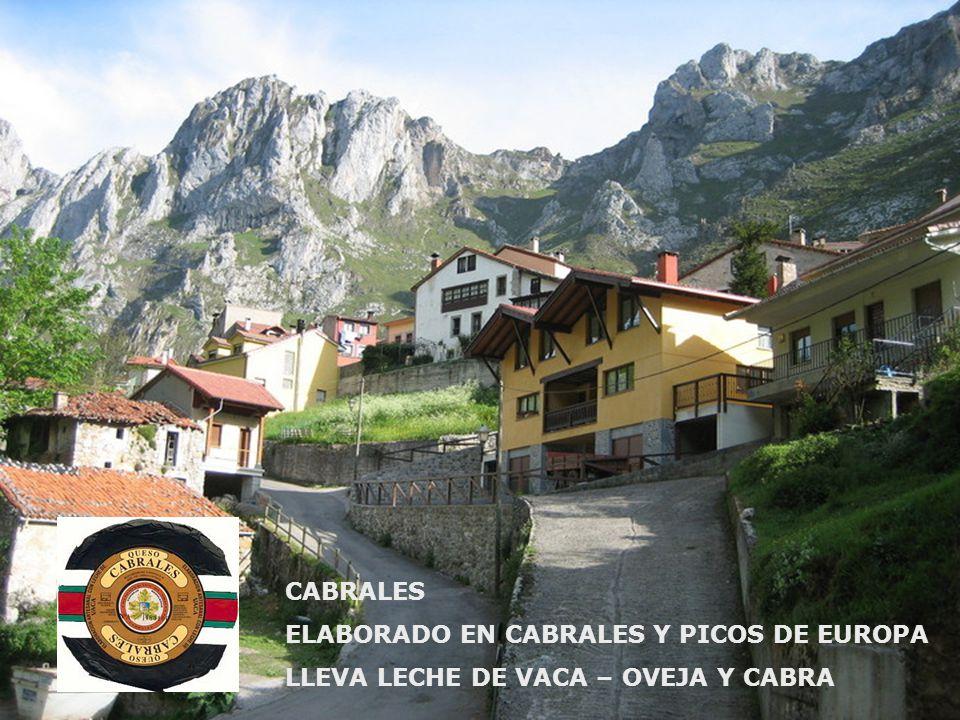 CABRALES ELABORADO EN CABRALES Y PICOS DE EUROPA LLEVA LECHE DE VACA – OVEJA Y CABRA
