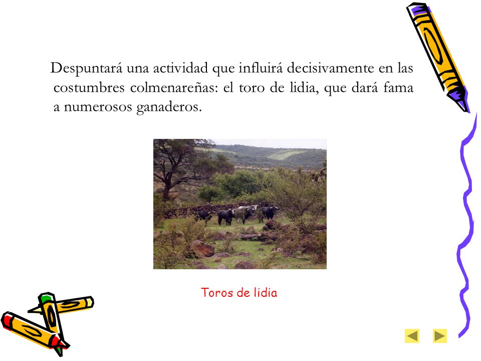 Despuntará una actividad que influirá decisivamente en las costumbres colmenareñas: el toro de lidia, que dará fama a numerosos ganaderos.