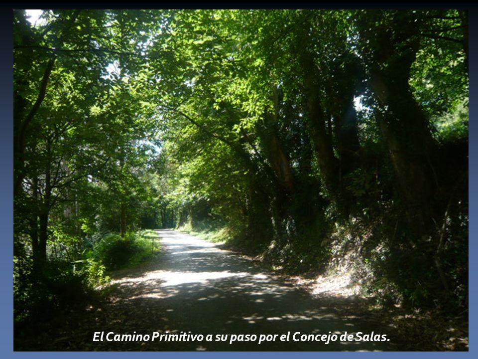 El Camino Primitivo a su paso por el Concejo de Salas.