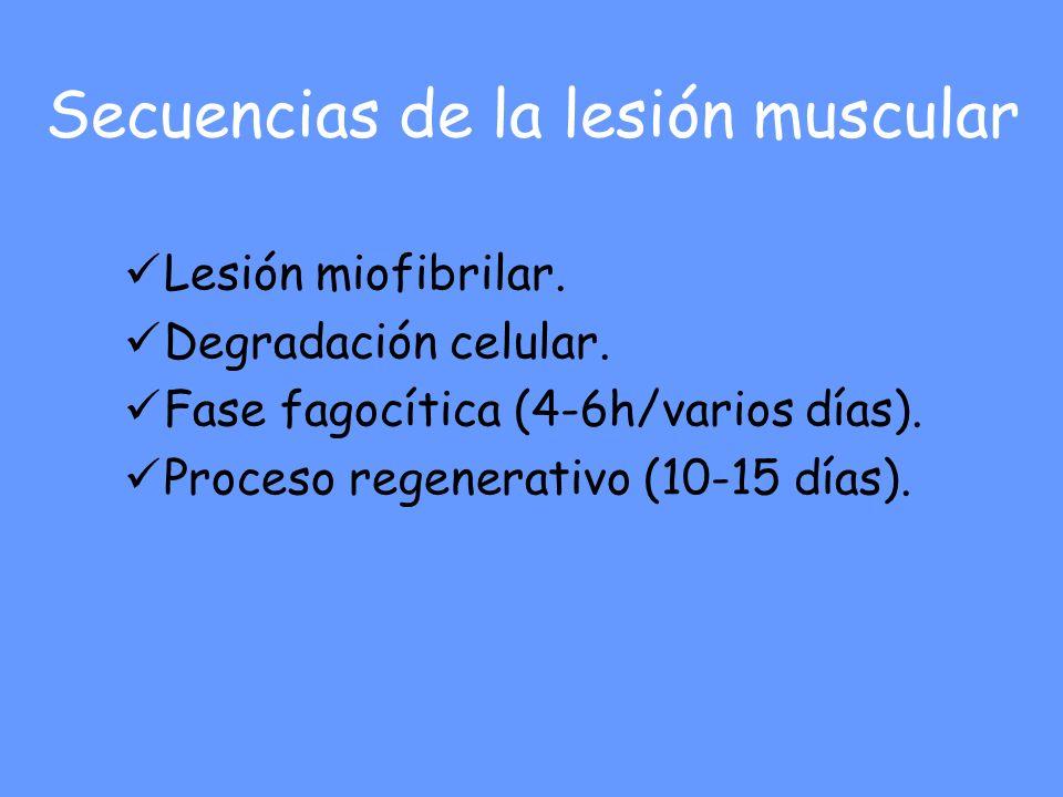 Secuencias de la lesión muscular