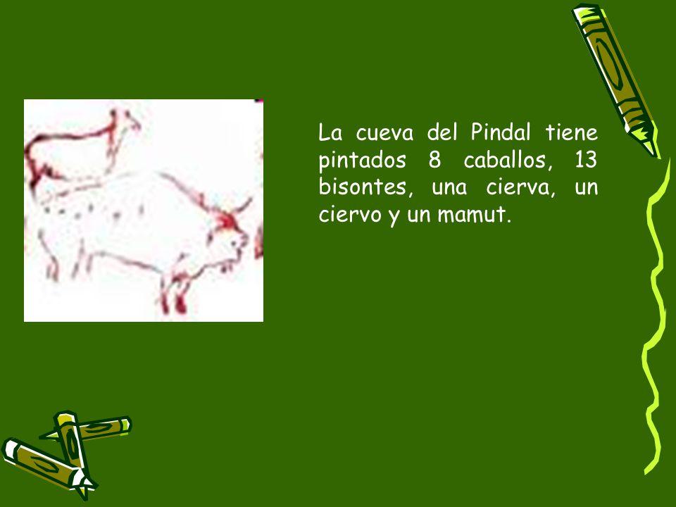 La cueva del Pindal tiene pintados 8 caballos, 13 bisontes, una cierva, un ciervo y un mamut.