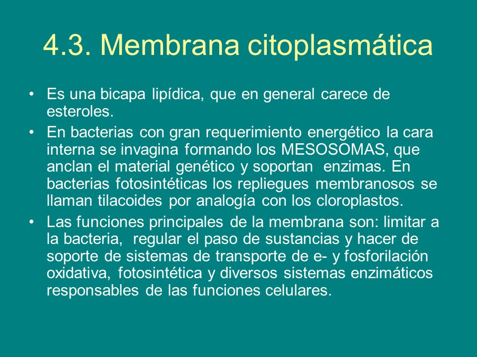 4.3. Membrana citoplasmática