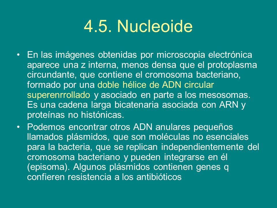 4.5. Nucleoide