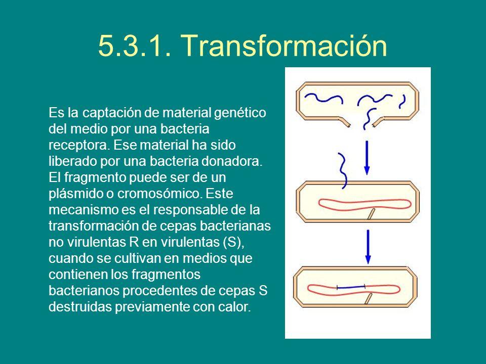 5.3.1. Transformación