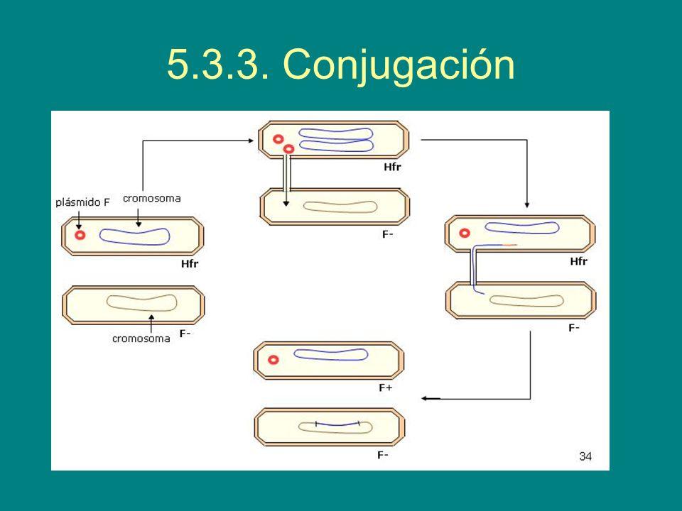 5.3.3. Conjugación