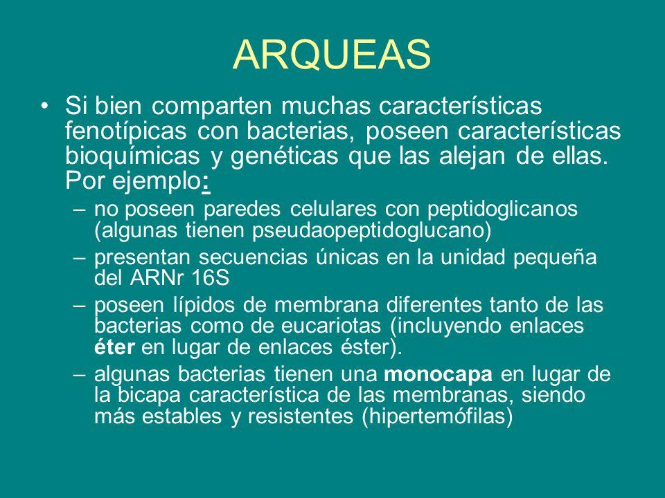 ARQUEAS