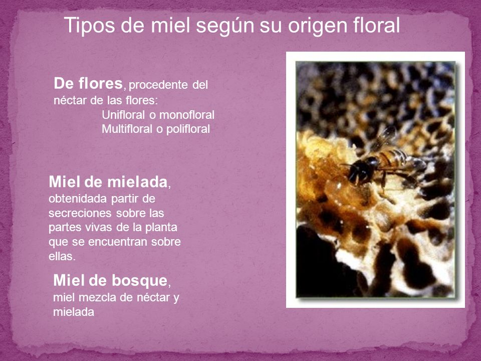 Tipos de miel según su origen floral