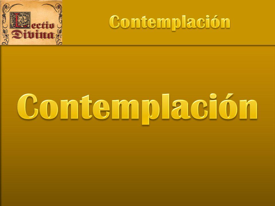 Contemplación Contemplación