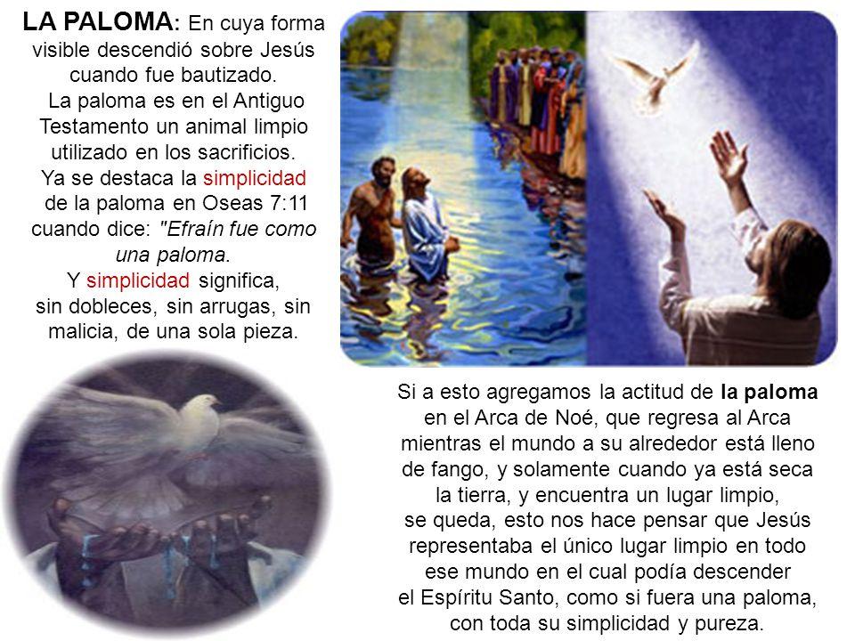 LA PALOMA: En cuya forma visible descendió sobre Jesús cuando fue bautizado.