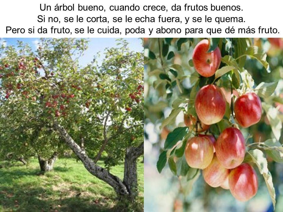 Un árbol bueno, cuando crece, da frutos buenos.